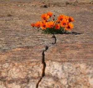 Flores en el desierto (ft img)
